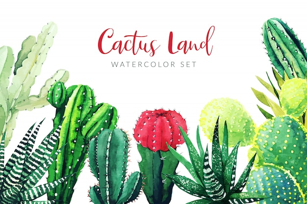 Cactus and succulents plants, horizontal background