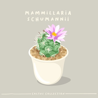 Cactus type collection. cactus in white small pot isolated on beige background.