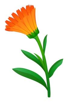 오렌지 컬러의 금송화 꽃