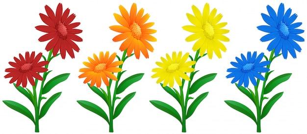4 가지 색상의 금송화 꽃