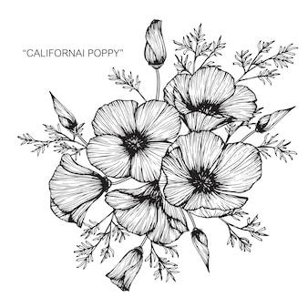 California poppy flower