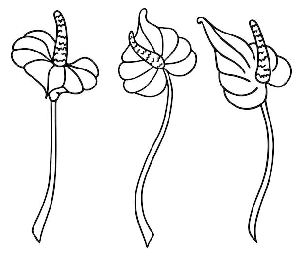 壁紙を飾るためのオランダカイウユリの花壁の装飾アイコン現代の入れ墨プリントプリント