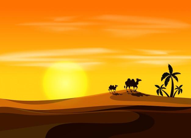 夕方の砂漠でキャメル