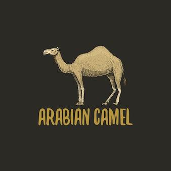Верблюжий гравированный логотип