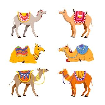 Camel set for desert caravan. cartoon illustrations