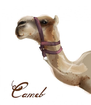 Camel in watercolor
