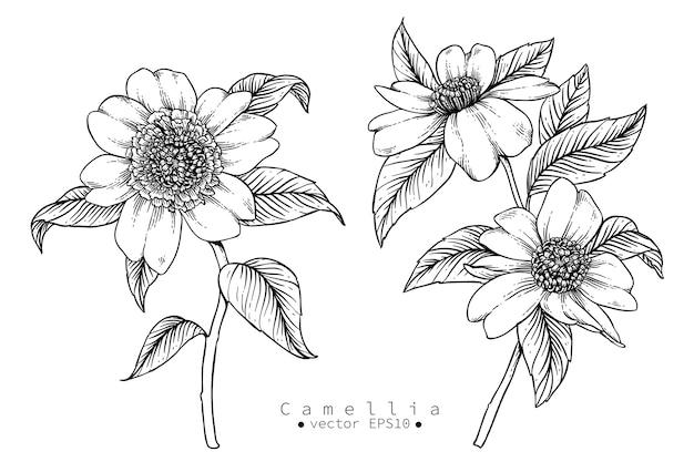 カメリアの花の図案