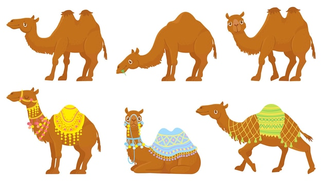 Набор верблюдов. дикие и одомашненные караванные животные пустыни с седлом