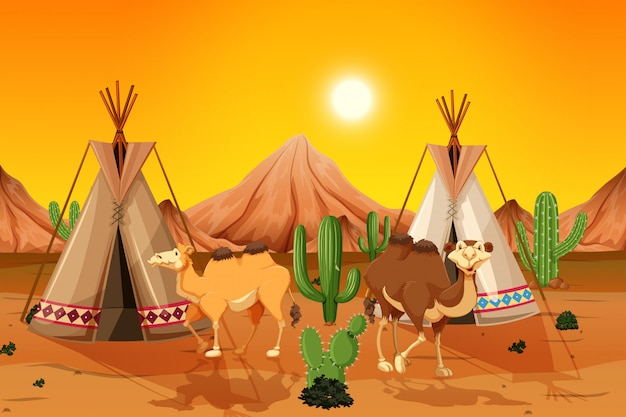 Camels and teepee in desert