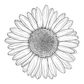 카밀레 또는 데이지 꽃