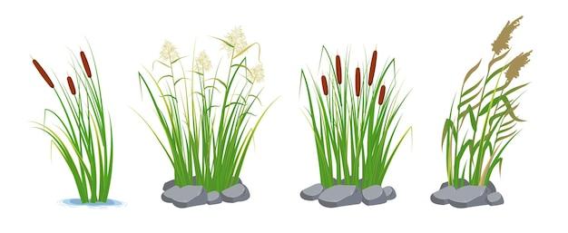바위와 푸른 잔디에 지팡이와 갈 대. 늪과 강 식물.
