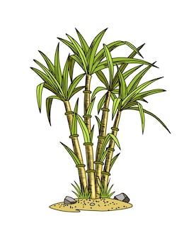 사탕수수. 사탕수수 공장. 손으로 그린 천연 유기농 식품이나 천연 재료를 조각합니다. 신선한 설탕 대나무.