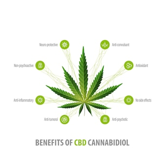 Cannabidiol benefits, white inphographic poster with icons of benefits and green leafs of hemp