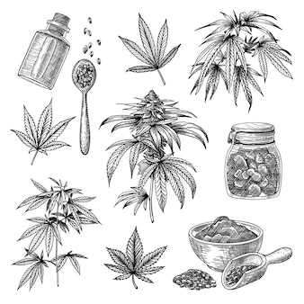 Cannabis or hemp engraved illustrations set
