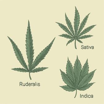 大麻の種類