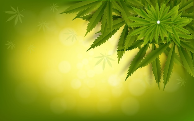 Cannabis leaf green  drug marijuana herb background