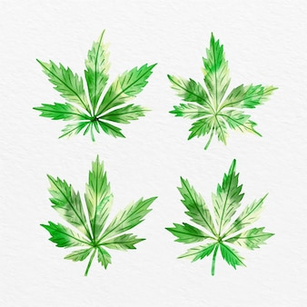 大麻の葉の水彩パック