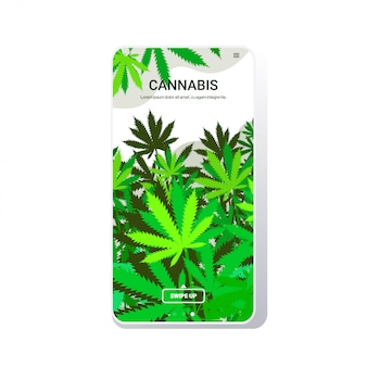 Cannabis leaves industrial hemp plantation growing marijuana plant commercial business drug consumption concept phone  screen mobile app copy space