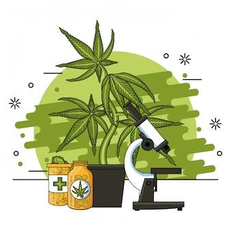 Cannabis medical concept