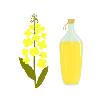 카놀라 꽃. 유채 기름의 병입니다. 강간 공장.