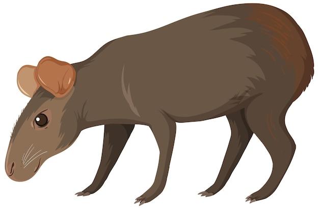 Capibara animale selvatico su bianco