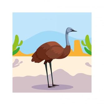 Карточка с эму в австралийском пейзаже