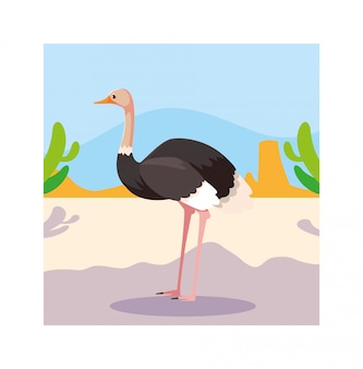 Card with ostrich in australian landscape