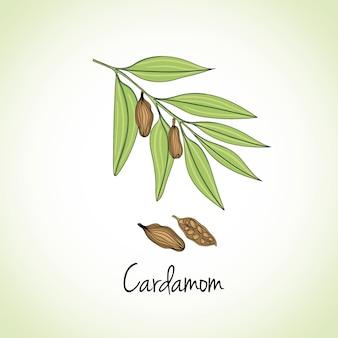 Кардамон травы и специи.