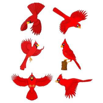 Cardinal cartoon set