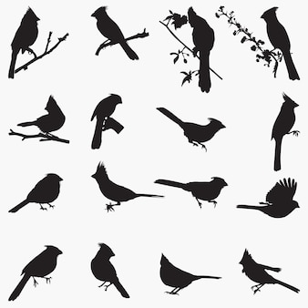 Cardinal silhouettes illustration