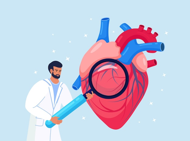 Cardiology. check up of heart health and cardiovascular pressure. cardiologist studying human organ with magnifying glass. circulatory system complications, ischemic heart, coronary artery disease