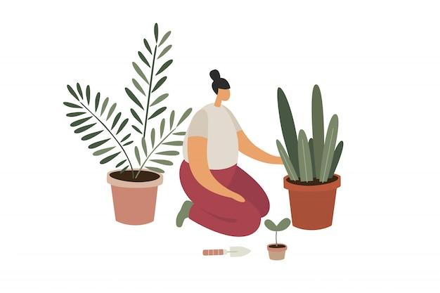 실내 식물의 관리 및 재배.