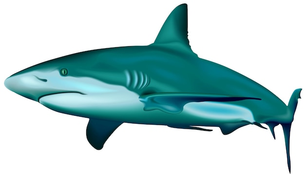 Карибская рифовая акула carcharhinus perezi