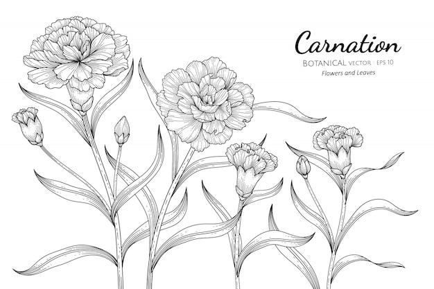 카네이션 꽃과 잎 손으로 화이트 라인 아트와 식물 그림을 그려