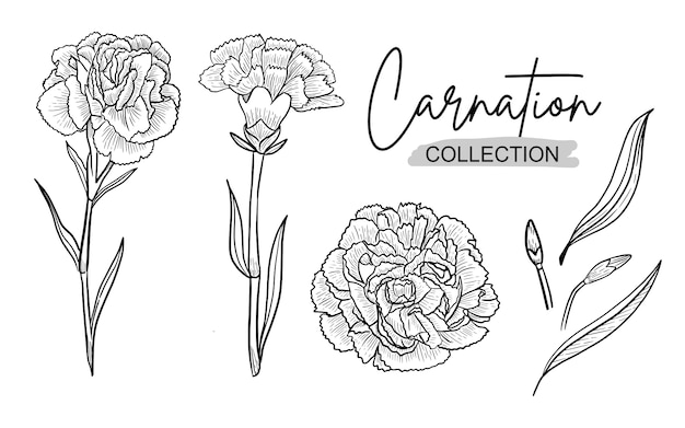 Carnation flower ink h drawing line art for wedding ornament