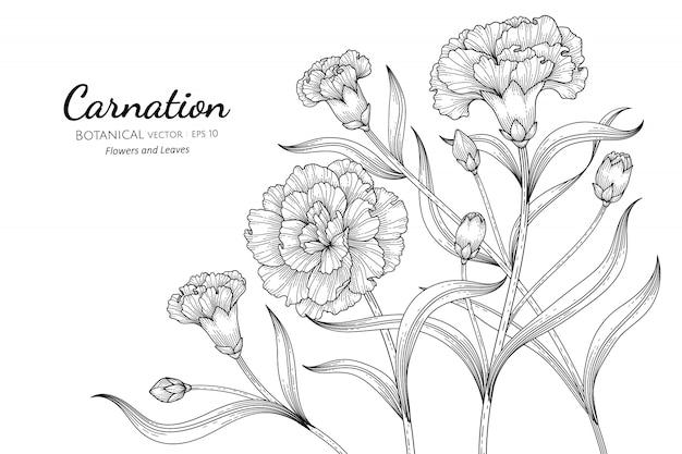 Carnation flower and leaf hand drawn botanical illustration with line art