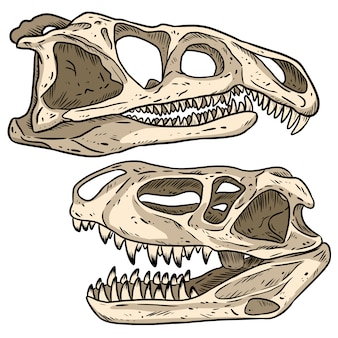 Carnivore dinosaurs skulls line hand drawn sketch image set. archosaurus rossicus and prestosuchus chiniquensi carnivorous dinosaur fossils illustration drawing