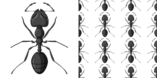 Carpenter ant isolated on white and carpenter ant seamless