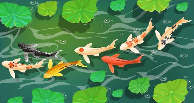 Карпы рыб кои под водой.