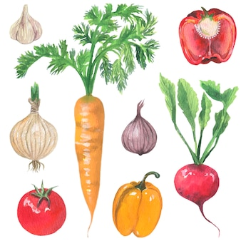 Carrot garlic tomato beets onions orange peppers red peppers vector isolated elements
