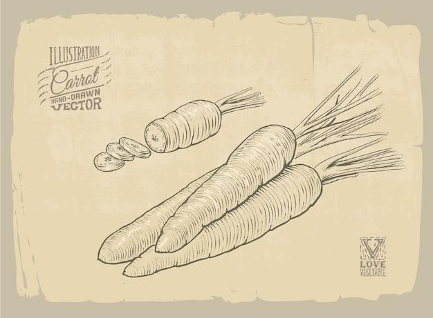 Carrot illustration