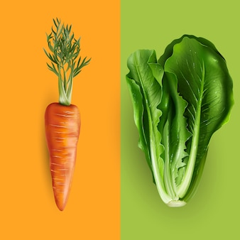 Carrot and lettuce illustration
