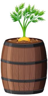 Pianta di carota in vaso di legno isolato su priorità bassa bianca