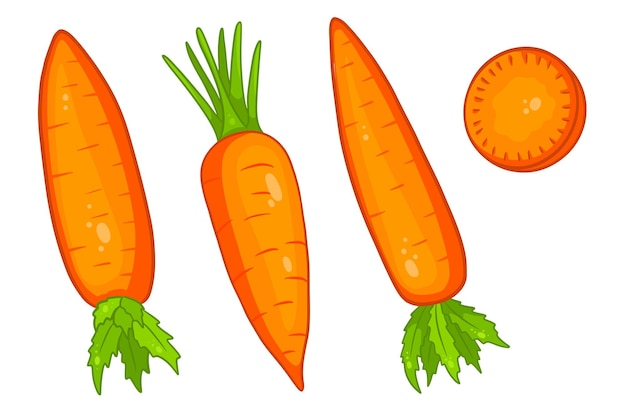 Carrot set. fresh carrots and slices. in a cartoon style. vector illustration for design and decoration.