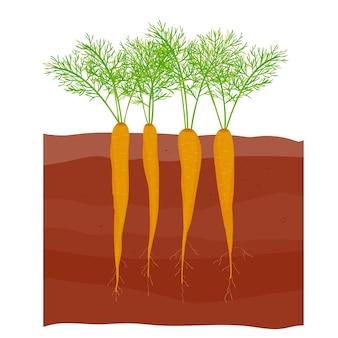 Морковь в огороде морковь ботва морковь растет с листьями и корнями
