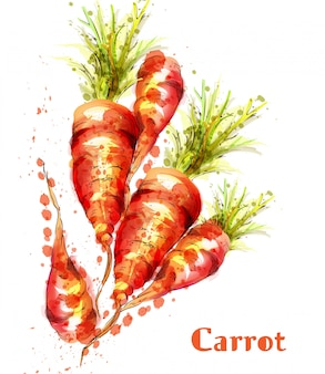 Carrots isolated watercolor