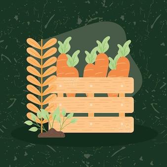 Carrots in wooden basket