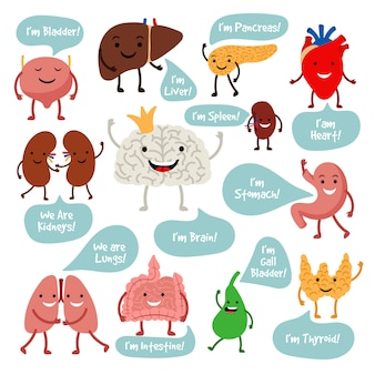 Cartoon anatomy organs with smiles