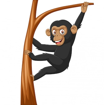 Cartoon baby chimpanzee hanging in tree branch