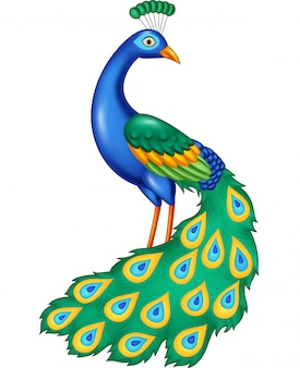 Cartoon beautiful peacock